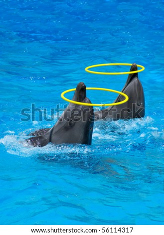 Two dolphins playing with rings in dolphinarium - stock photo