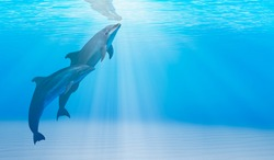 Two dolphins swimming underwater in the blue tropical sea
