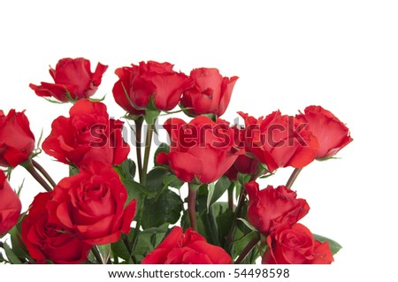 Two dozen red roses isolated on white background with the green stems ...
