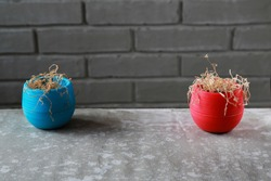 Two dried indoor flowers stand in small pots, against a gray brick wall. Dry flowers in red and blue flowerpots, close-up. Wilted plants.
