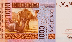 Two Dromedary camels (Camelus dromedarius) in a desert of Sahel region. Portrait from Niger 1000 Francs 2019  Banknotes.