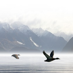 Two Ducks Flying over Lake