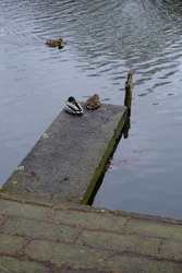 two ducks relax