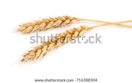 two ears of wheat isolated on white background. Top view #716388304