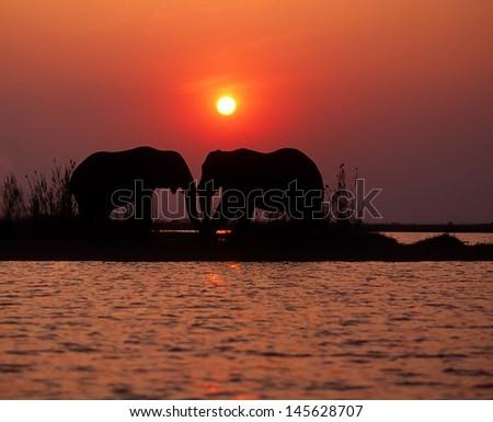 Two elephants at sunset, Lake Kariba, Zimbabwe