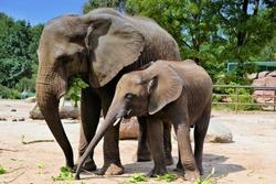 two elephants in a zoo
