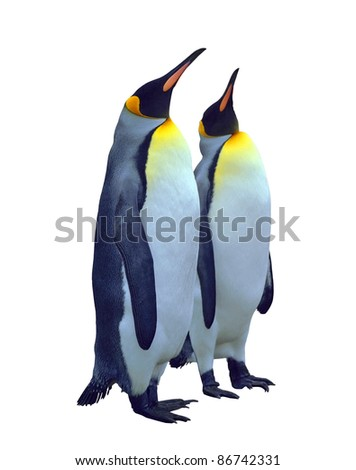 Two emperor penguin isolated on white with clipping path