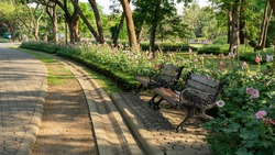 Two empty wooden bench in public garden beside walkway and tropical flowering plant under greenery trees