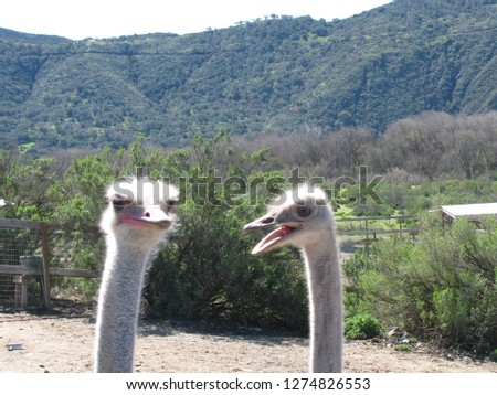 Two Emus Discussion #1274826553