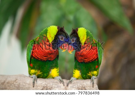 two enamored parrots #797836498