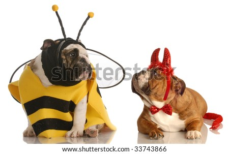 two english bulldogs dressed up as a bee and devil