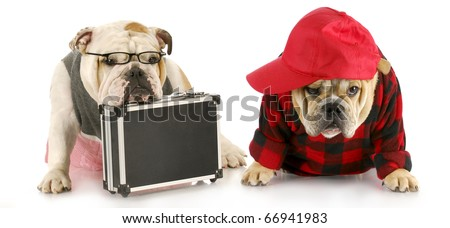 two english bulldogs with their suitcase packed and looking stressed out