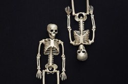 Two fake skeletons on black background. Halloween decoration, scary theme