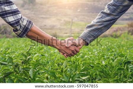 Two farmer shaking hands on potato leaves When sunset. #597047855