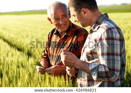 Two farmers in a field examining wheat crop.  #426986821