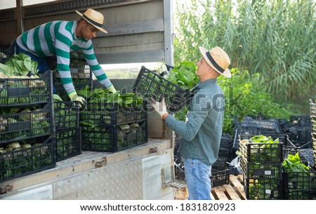 Two farmers load boxes of chard into a truck Сток-фото ©