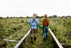 Two farmers or agronomists walking on the farmland for growing snails, rear wide angle view. Concept of agribusiness and farming