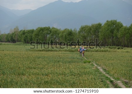 two farmers walk on path of wide green wheat cornfield farmland field afternoon. mountain green trees forest background. Chinese idyllic scenery. rural countryside style concept.in Dali Yunnan China  #1274715910