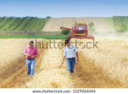 Two farmers walking on golden wheat field during harvest in summer. Seasonal agricultural works