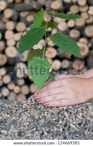 Two female hands protect a young tree. the young Tree comes out of the pile of pellets, chopped firewood background.