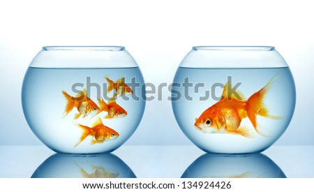 Two fishbowls with gild fishes