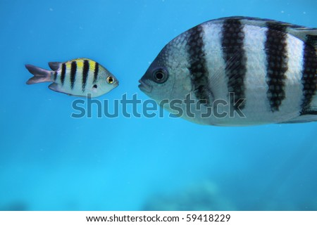 Two fishes under water