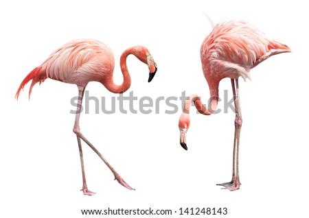 Stock Photo Two flamingo isolated on white background