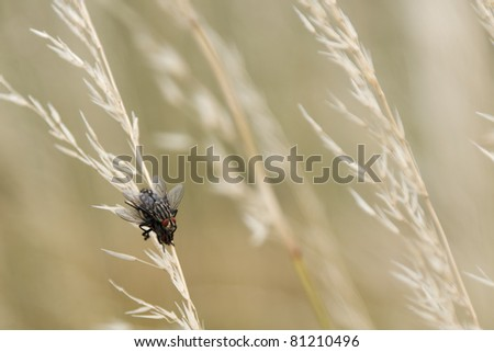 Two flies mating in the grass