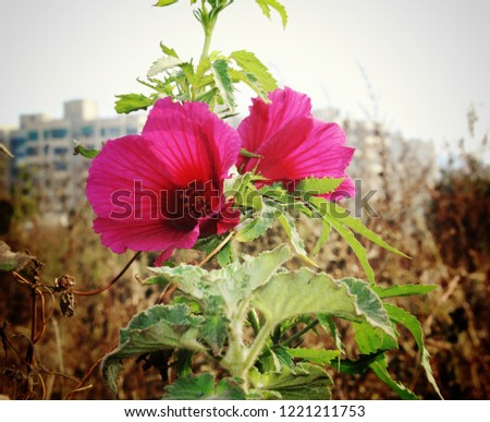 two flowers romance #1221211753