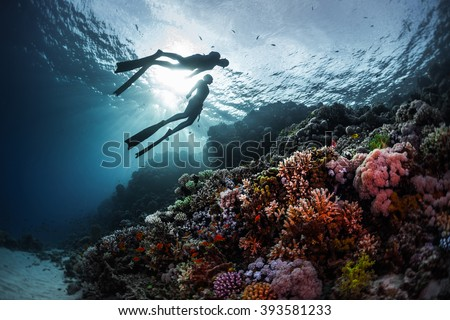 Two freedivers swimming underwater over vivid coral reef. Red Sea, Egypt #393581233