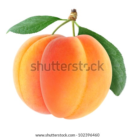 Two fresh apricots isolated on white