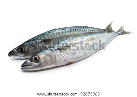 two fresh mackerel fish over white background