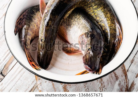 Two fresh pike fish in a bowl.Fish pike.Raw pike. #1368657671