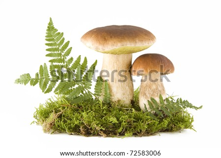 Two fresh porcini mushrooms in a green moss isolated on white