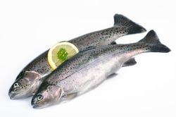 Two fresh trout