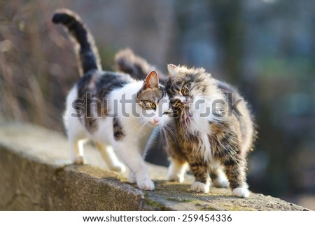 Two friendly cats on spring  #259454336