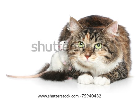 Two friends, cat and rat resting on a white background