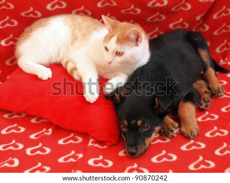 Two friends dog and cat in the red home.