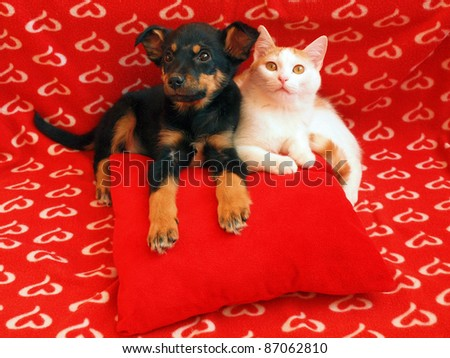 Two friends in the red home. - stock photo