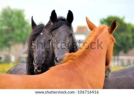 Two friesians and a brown horse