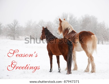 Two frosty horses in fog and snow gazing to distance, with text Seasons greetings - stock photo