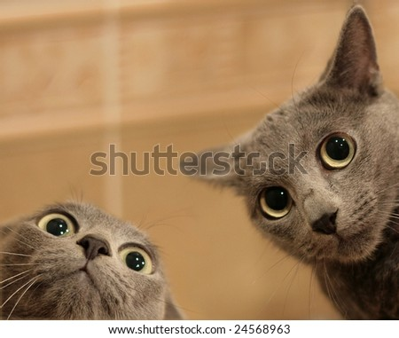 Two funny cats look in wide eyed astonishment