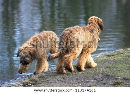 Two funny dogs frolicking in the park
