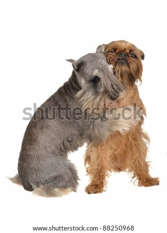 Two funny dogs playing hugging each other, isolated