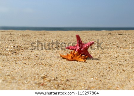 Two funny fish stars on the empty beach
