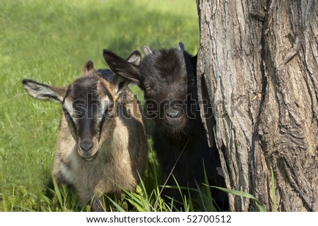 Two funny kids looking out of the tree stem