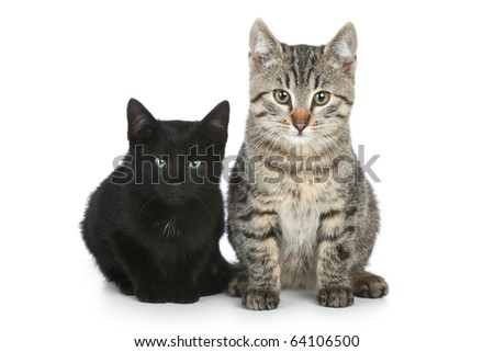 Two funny kittens sit on a white background - stock photo