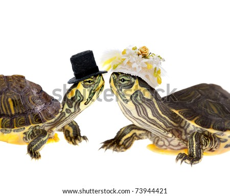Two funny little green turtles in love getting married