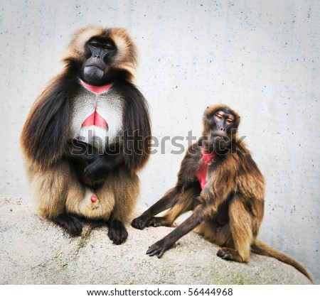 two funny monkeys