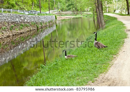 Two geese near a stream on the C&O Canal